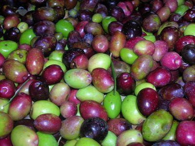 olives étalées