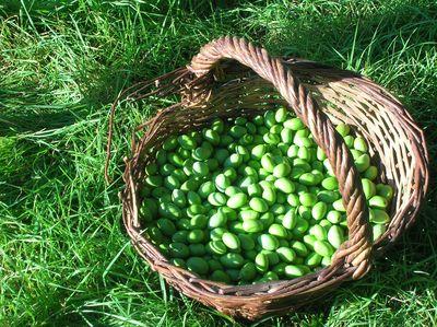 panier olives