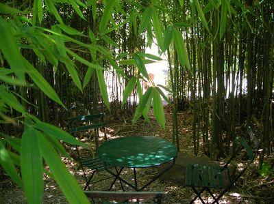 bambous1