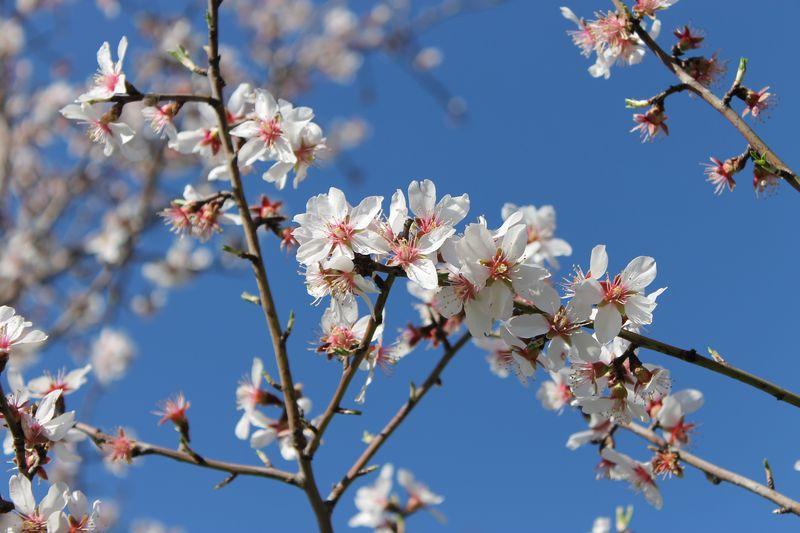 Floraison de fin d 39 hiver campagne sigalloux for Floraison hiver