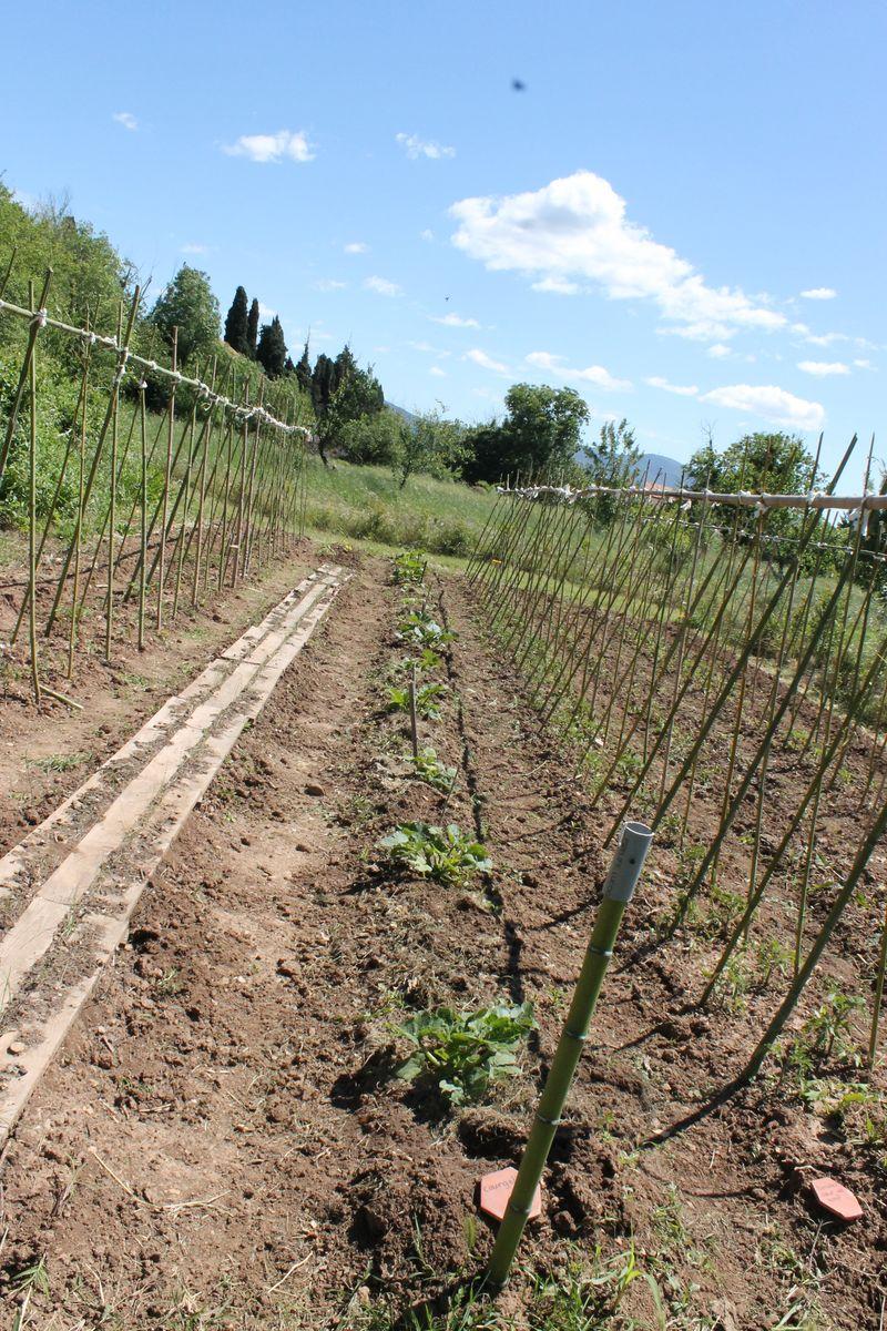 Très Technique du tuteurage des tomates - Campagne Sigalloux IN75