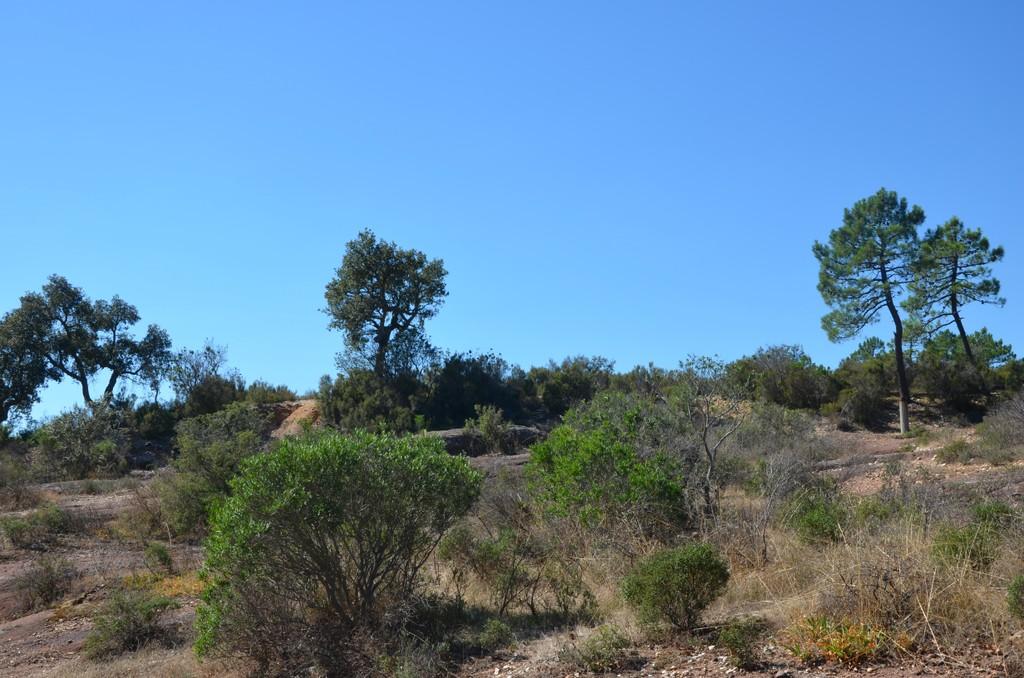 reserve plaine des maures