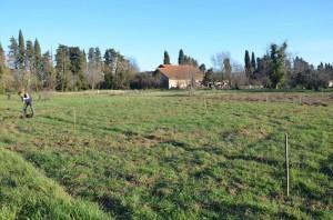 plantation oliviers 1