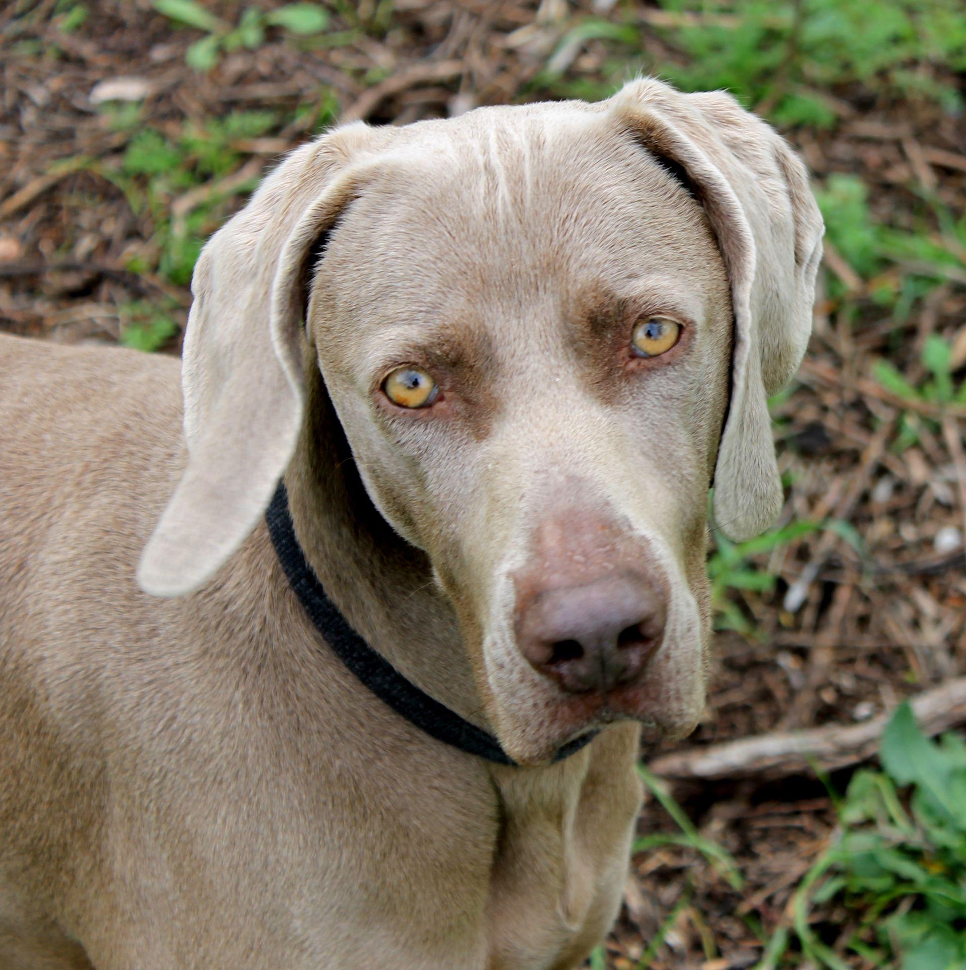 Jody, le chien des Jardins Sigalloux